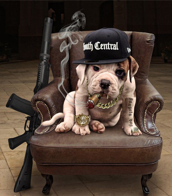 Пес в кресле